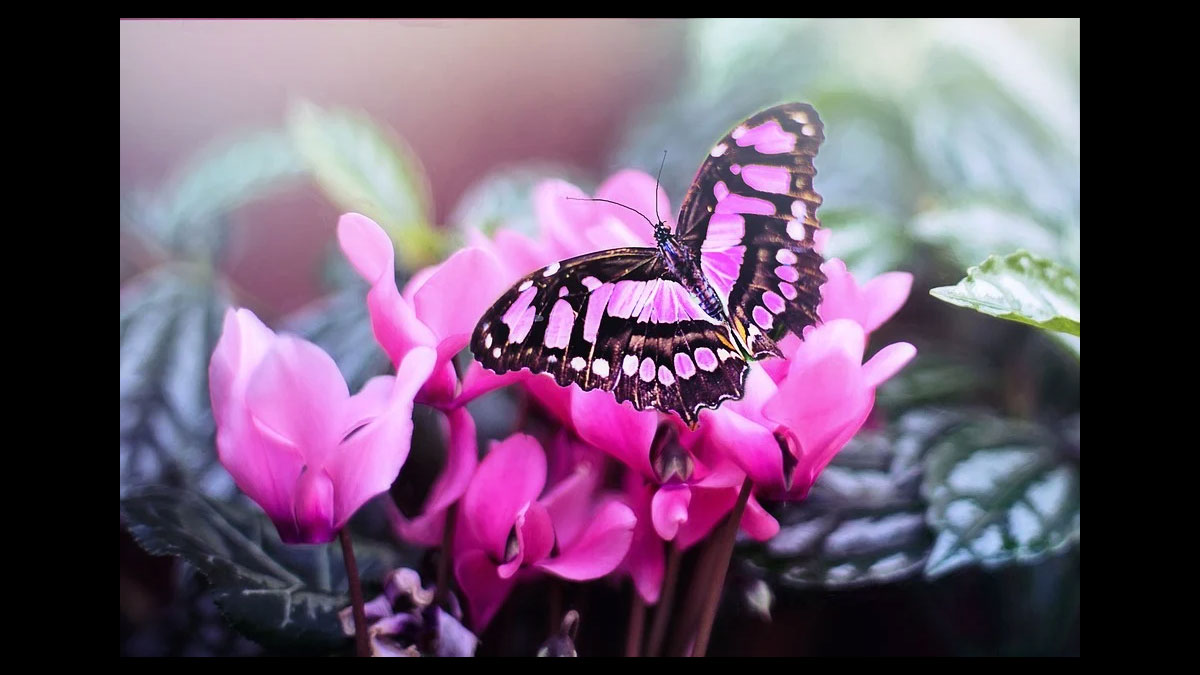 pink butterfly - Volusia County Master Gardener Plant Faire